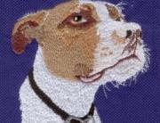 Tyson Dog